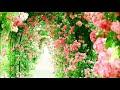 #作業用BGM #ディズニーピアノ 「ディズニー特集1」Piano:Yuka Saito