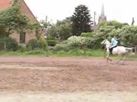 à cheval compilation
