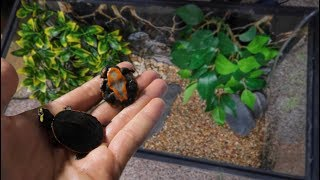 2 NEW RARE BABY TURTLES....