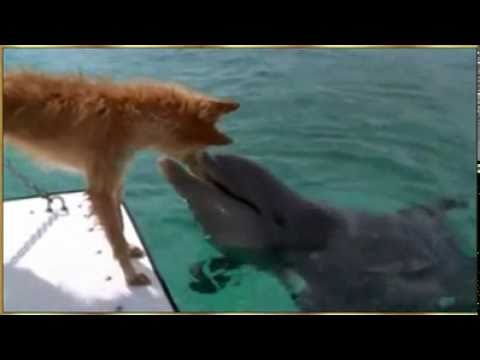 El Perro y el Delfin @enrique_kur