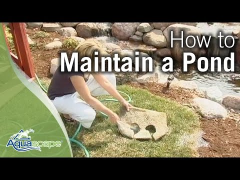How To Maintain Water Gardens, Ponds, Water Features