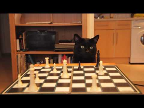Can a Thumbcat - Play Checkers?