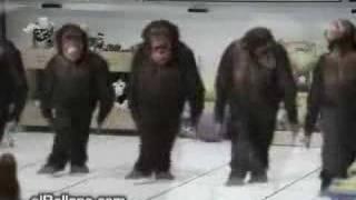 Maymun'Lar Ne GüzeL Horon Ediyor