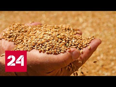 В Московской области собран самый большой урожай зерна за всю историю - Россия 24