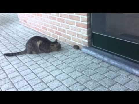Tom And Jerry In Real Life video