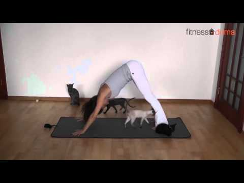 Йога с котятами