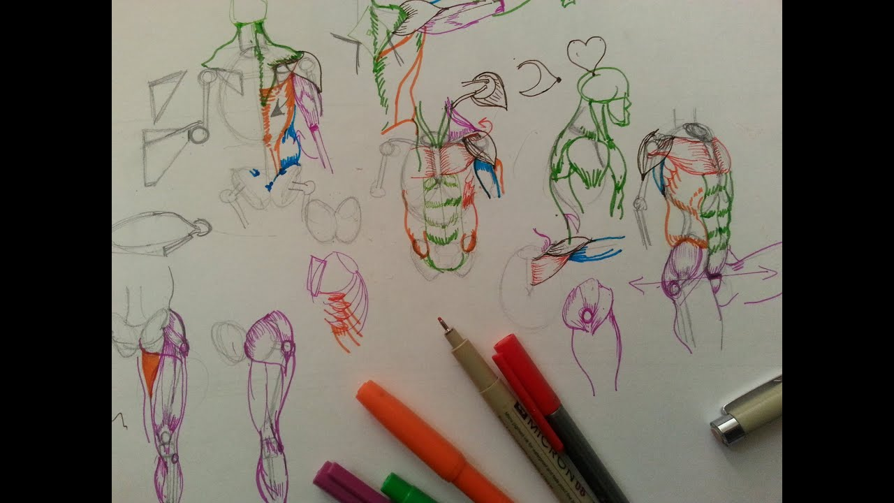 Anatomy Skeleton Drawing How to Draw Human Anatomy Part
