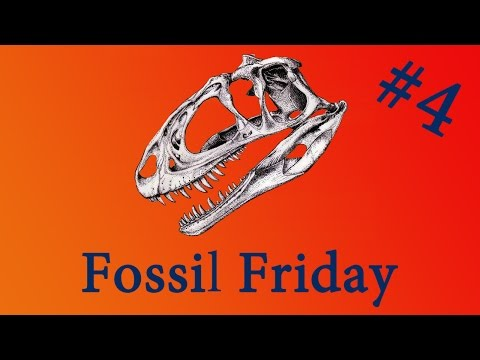 Fossil Friday #4 - Mary Anning's Ichthyosaur - #FossilFriday