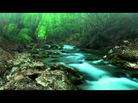 FOREST CREEK Nature Sounds | 11 Hours (For stress relief, relaxation &...