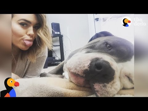 Pit Bull Adopted by Pro Baseball Player Amir Garrett Is Living the Life | The Dodo
