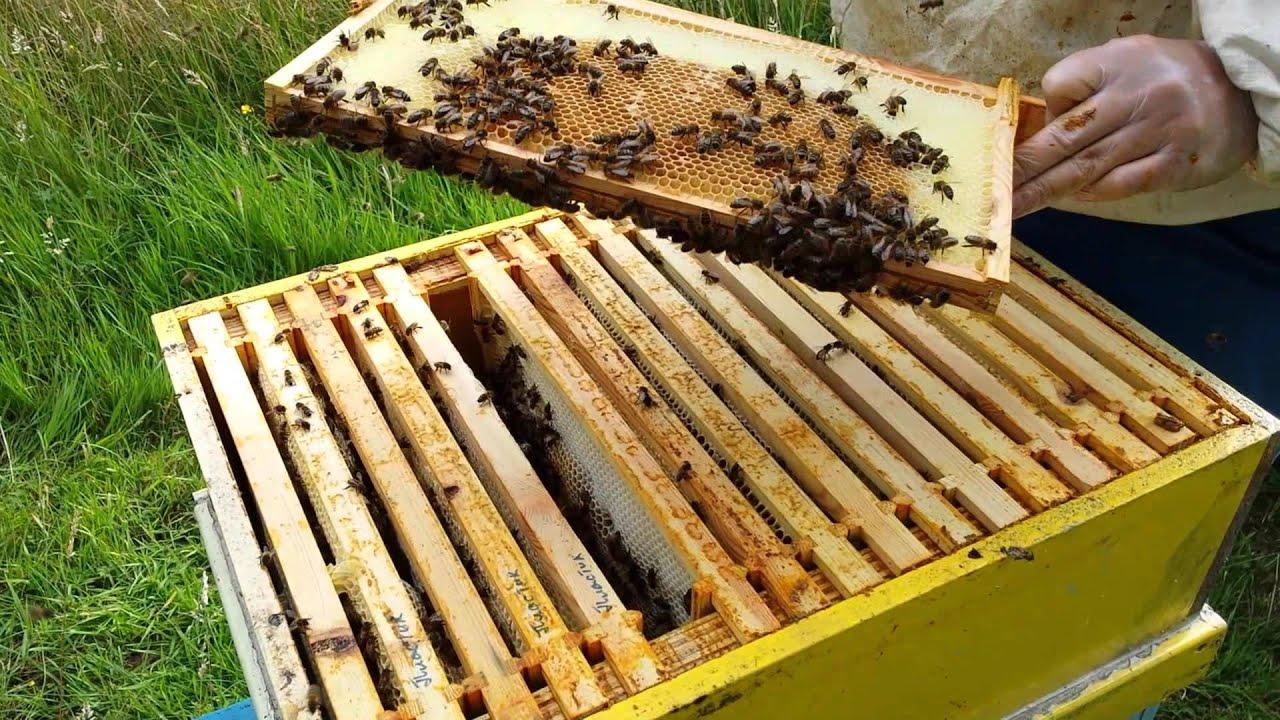 Как сделать крышку для улья из ППС Заметки пчеловода 8