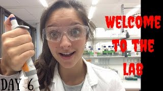 A day as a marine biologist PhD student #6 | The lab!