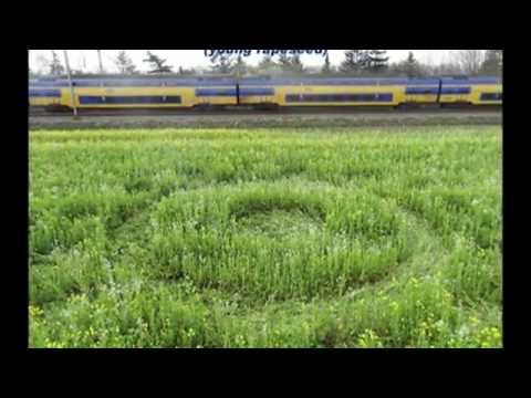 2014 crop circles: Roosendaal, Netherlands - 20 March