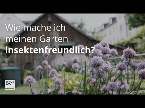 Bienen, Schmetterlinge & Co.: Wie mache ich meinen Garten insektenfreundlich? | #fragBR24