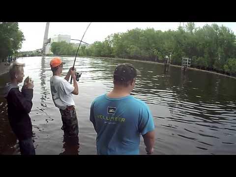 Asian Carp Minnesota Bayport