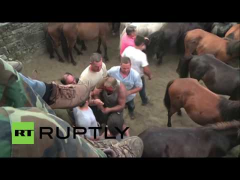 Spain: Men attempt to fight wild horses at 'Rapa das Bestas'