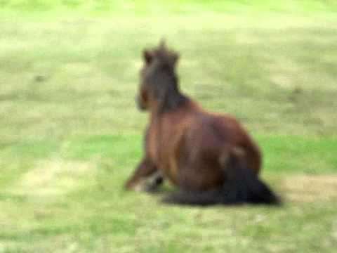 Funny Pony Video Tikky 096.MOV