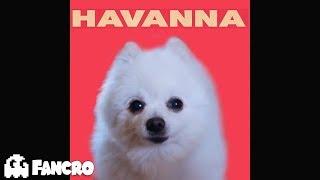 Download Lagu Havana - Cover Perros Gratis STAFABAND