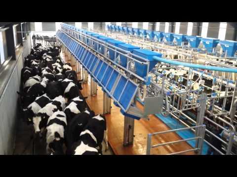 Dairymaster state-of-the-art 36-unit rapid-exit parlour on Kilkenny farm
