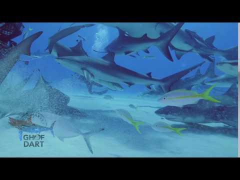 Tiger Beach & Lemon Sharks - Guy Harvey