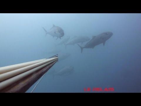 denti ,denton ,loup et lubina chasse sous marine Le relais pesca submarina