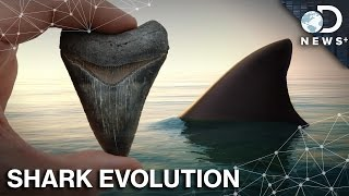 How Did Sharks Survive 5 Mass Extinctions?