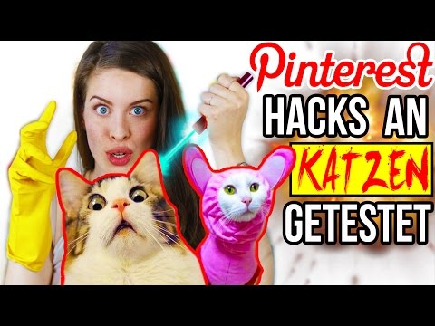 KRASSE PINTEREST HACKS AN KATZEN LIVE GETESTET! 😱 LIFE HACKS im TEST | DIY CAT & HUNDE LIFEHACKS