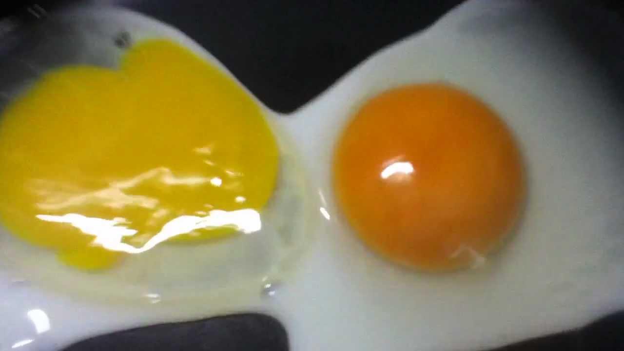 Com Organic Egg vs Non