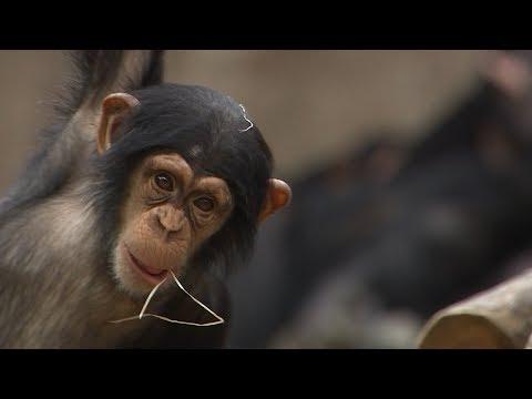Namen-Voting fürs Schimpansenbaby