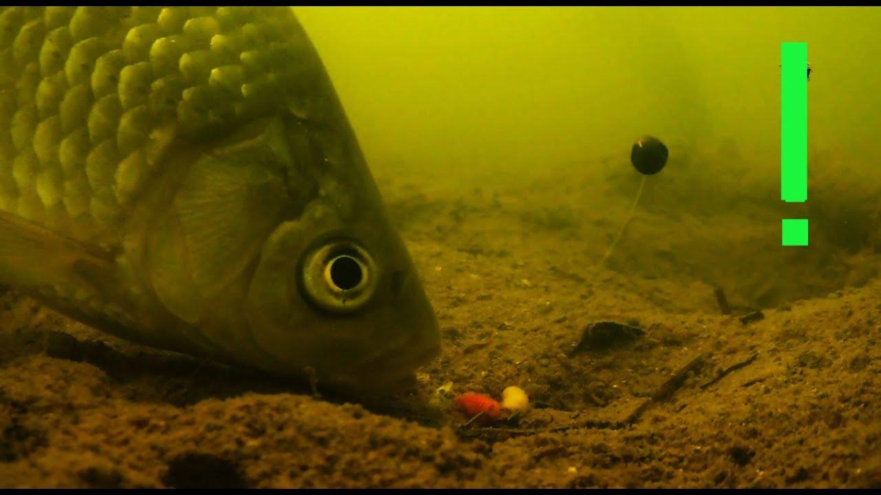подводная съемка ловля карпа сеткой