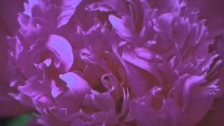 Dein Für Immer (05-38) Musik Von Siegfried Zabransky