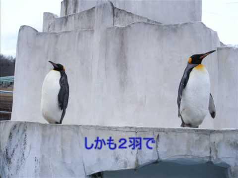 黄昏ペンギン