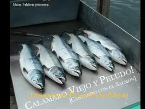 Sin saber que decir - Andrés Calamaro