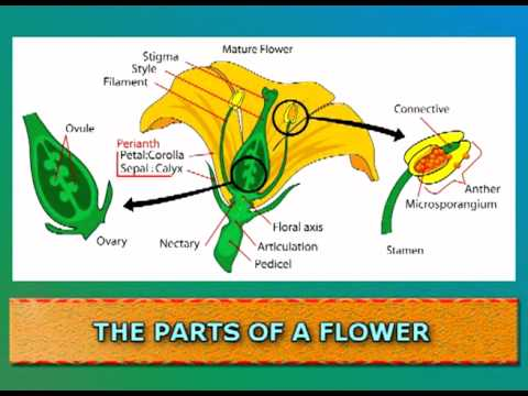 Watch on Plant Life Cycle Kids