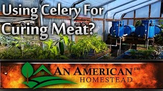 Using Celery For Curing Meat?