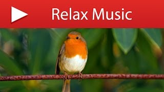 10 HOURS BIRD SOUNDS - Gentle Bird Chirping with Natural Forest Stream