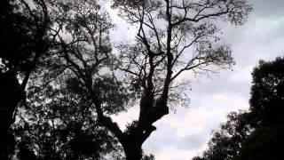 Vídeo 145 de Harpa Cristã