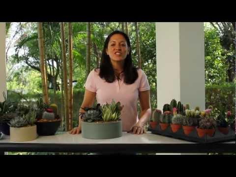 Cacti &amp  Succulents