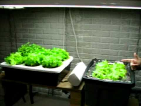 Dwc definition crossword dictionary for Hydroponic raft system design