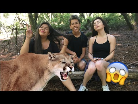 Lost In A Forest With Mountain Lions | Vlog3
