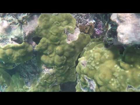 Snorkling in jamaica (doctor cave beach) 2