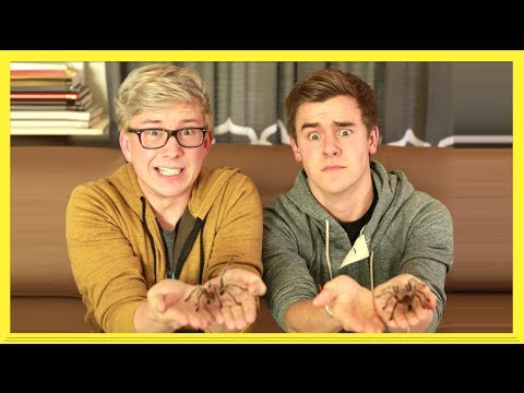The Tarantula Challenge (ft. Connor Franta)   Tyler Oakley video
