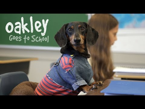 Ep 10: OAKLEY GOES TO SCHOOL - Cute Dog Video School Day