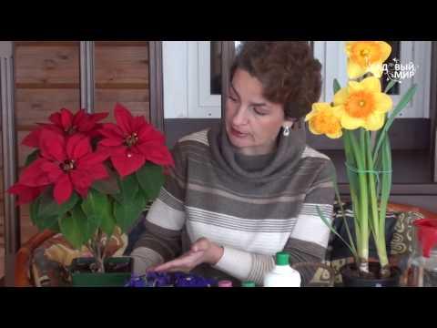 Что делать если подарили цветы в горшках