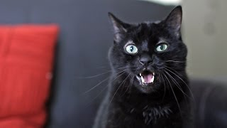 What Does the Cat Say? - Ylvis - The Fox (What Does the Fox Say?) [Official music video HD]
