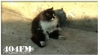 Кот неудачник даст совет | Cat loser will give advice