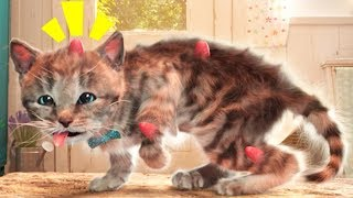Fun Pet Care Games - Little Kitten Adventures - Play Cute Kitten Dress Up Cartoon Games For Kids