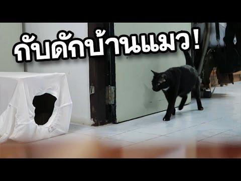 แกล้งแมว ด้วย กับดักบ้านแมว EP8 ฮามาก   เขม่า แมวดำ แมวตลก
