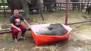 Baby Elephant Bathing