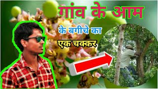 Village lifestyle   Mango garden   cricket playground and flowers of mango